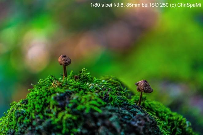 Wald_0038