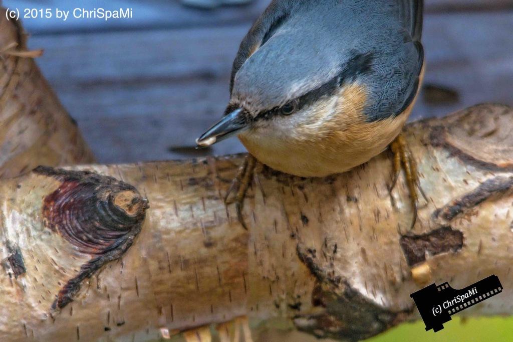 Birds_0040