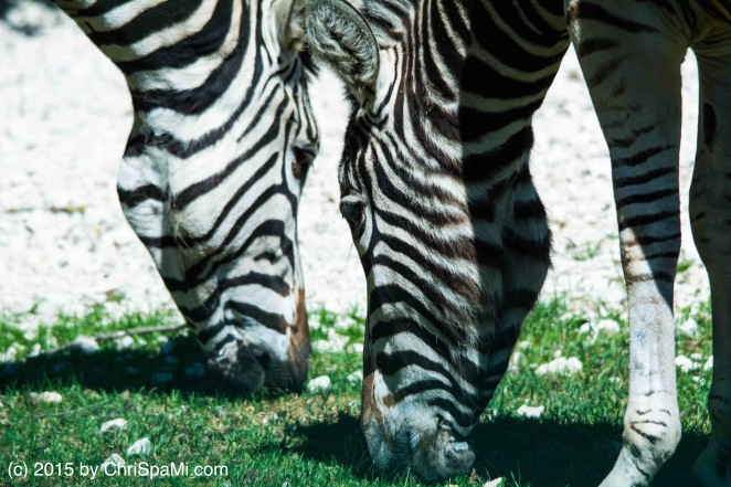 Zoo_Linz_0020