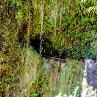 Im tiefen Dschungel von #Madeira