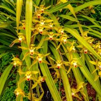 Blumen und ein Pfau auf #Madeira