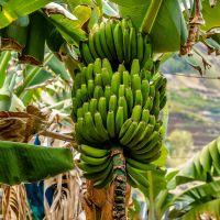 #Früchte und #Blüten aus #Madeira