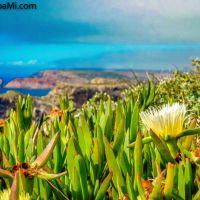 #Sagres und die #Blumen