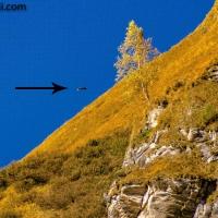 #Steinadler im Anflug