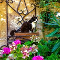 #Cordes-sur-Ciel für Romantiker III