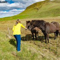 Stopp bei den #Islandpferden