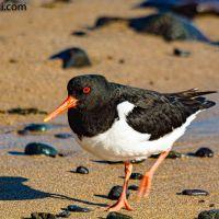 Tiere am Strand von #Island